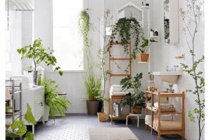 Plantas en tu baño, buena idea