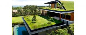 ¿Por qué implementar un techo verde en casa?